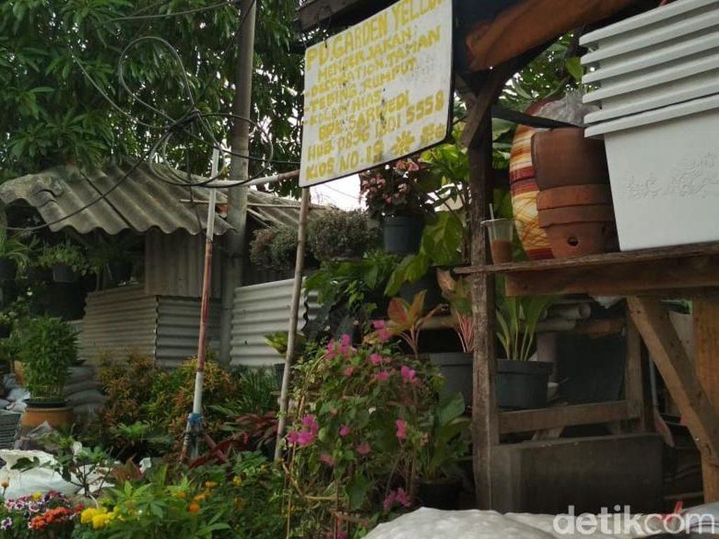 Lidah Mertua Disebut Tangkal Polusi, Ini Reaksi Pedagang Tanaman di DKI