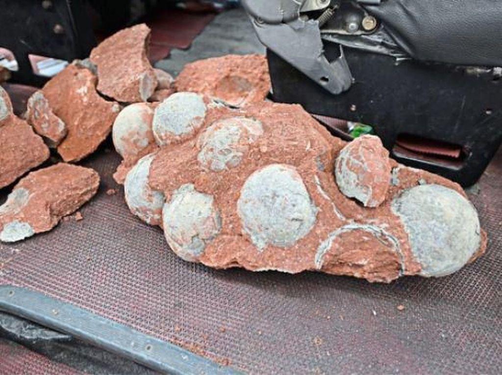 Bocah China Temukan Fosil Telur Dinosaurus Berusia 66 Juta Tahun