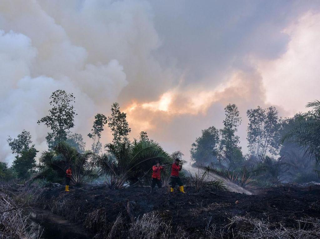 Manajer PT SSS Ditahan Polda Riau Terkait Kasus Karhutla