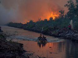 Karhutla di Riau Semakin Meluas, Sawit Warga Terbakar