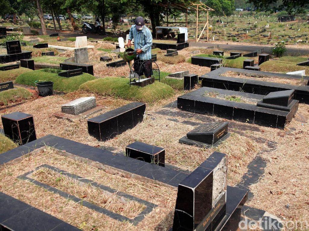 Kemarau, Rumput TPU Tanah Kusir Mengering dan Mati