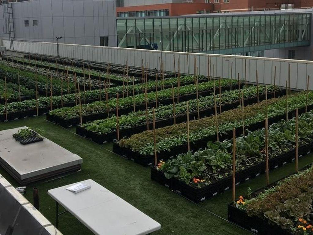 Keren! Rumah Sakit Ini Bikin Ladang Pertanian di Rooftop