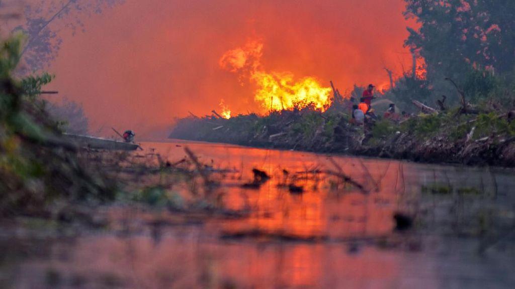 Penampakan Kobaran Api yang Lumat Lahan Gambut di Riau