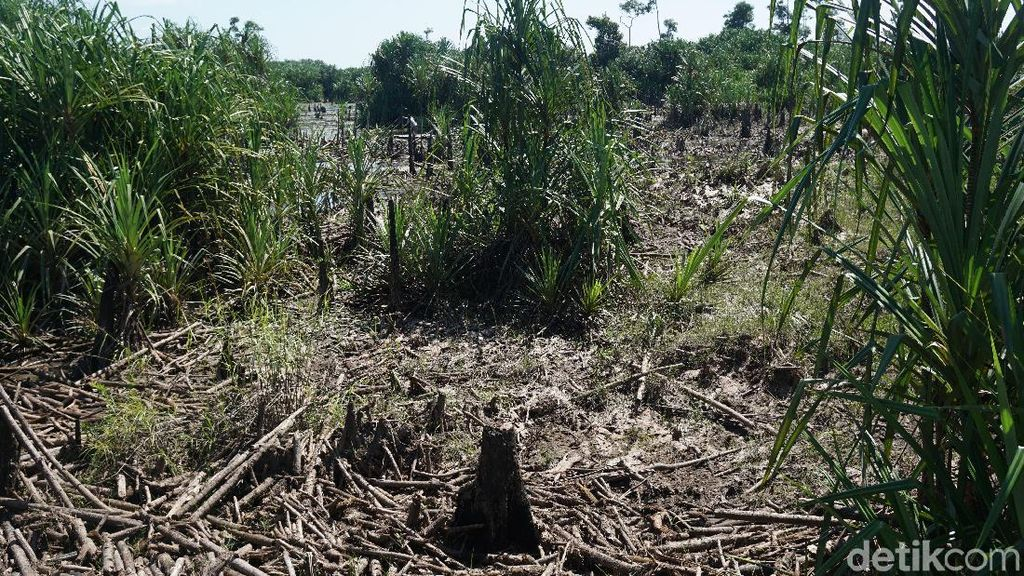 Foto: Sungai Purba Zaman Kenozoikum di Belitung
