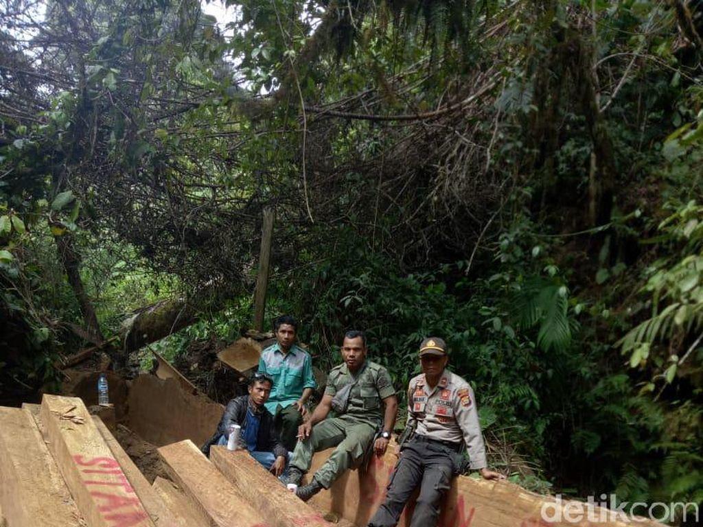 100 Kubik Kayu Illegal Logging Ditemukan di Hutan Gunung Tambora