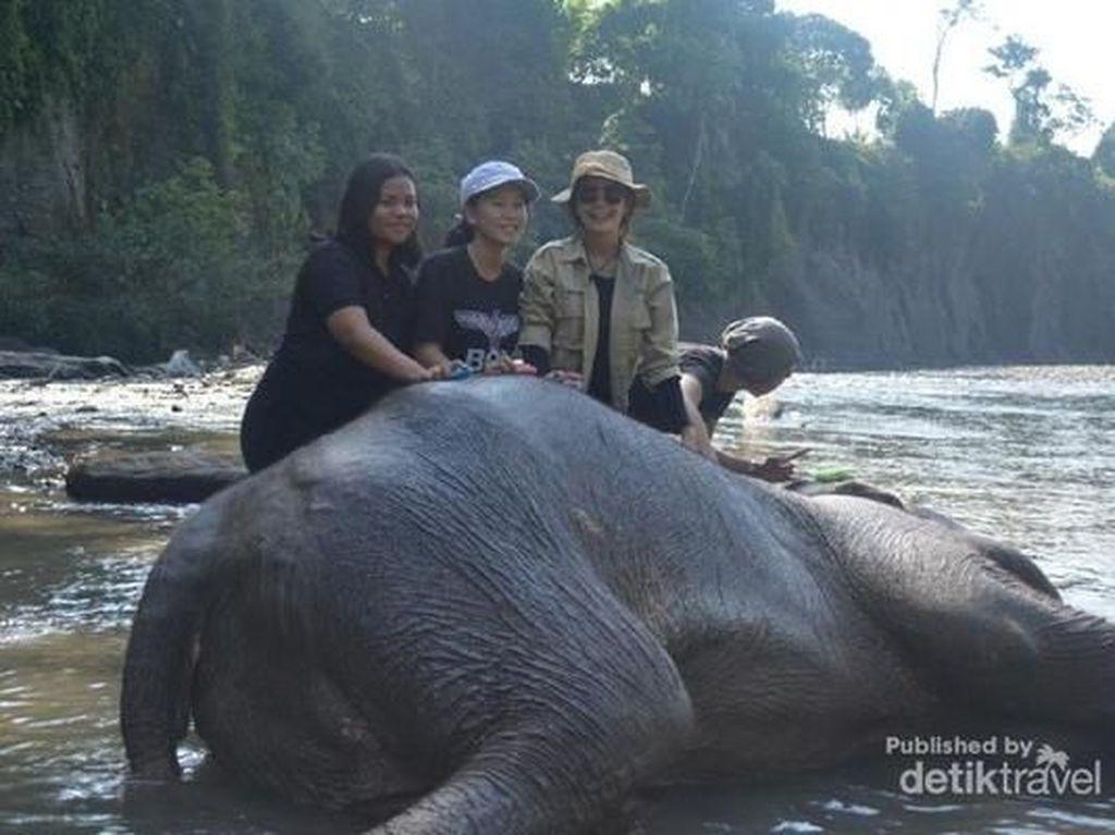 Foto Tangkahan, Tempat Nicholas Saputra Mandikan Gajah