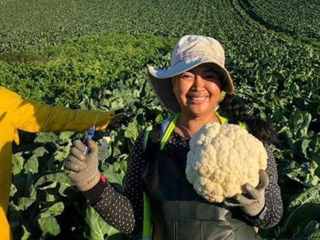 Perempuan Yogyakarta Ini Tak Gentar Jadi Petani Musim Dingin di Australia