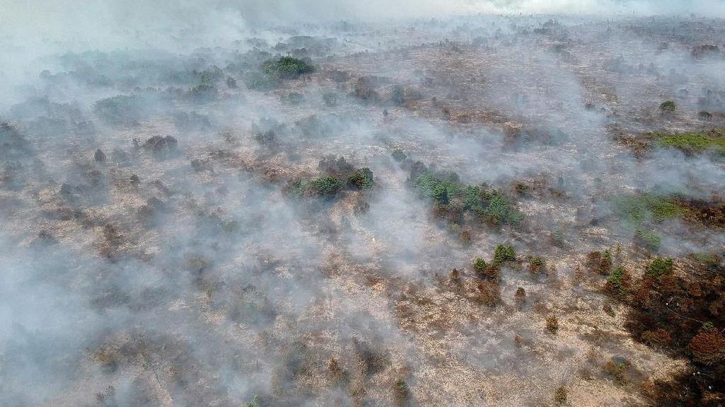 Penampakan Kebakaran Lahan di Jambi dari Udara