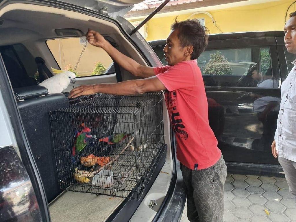 Polisi Tangkap Penjual Burung Kakatua Jambul Kuning di Sulteng