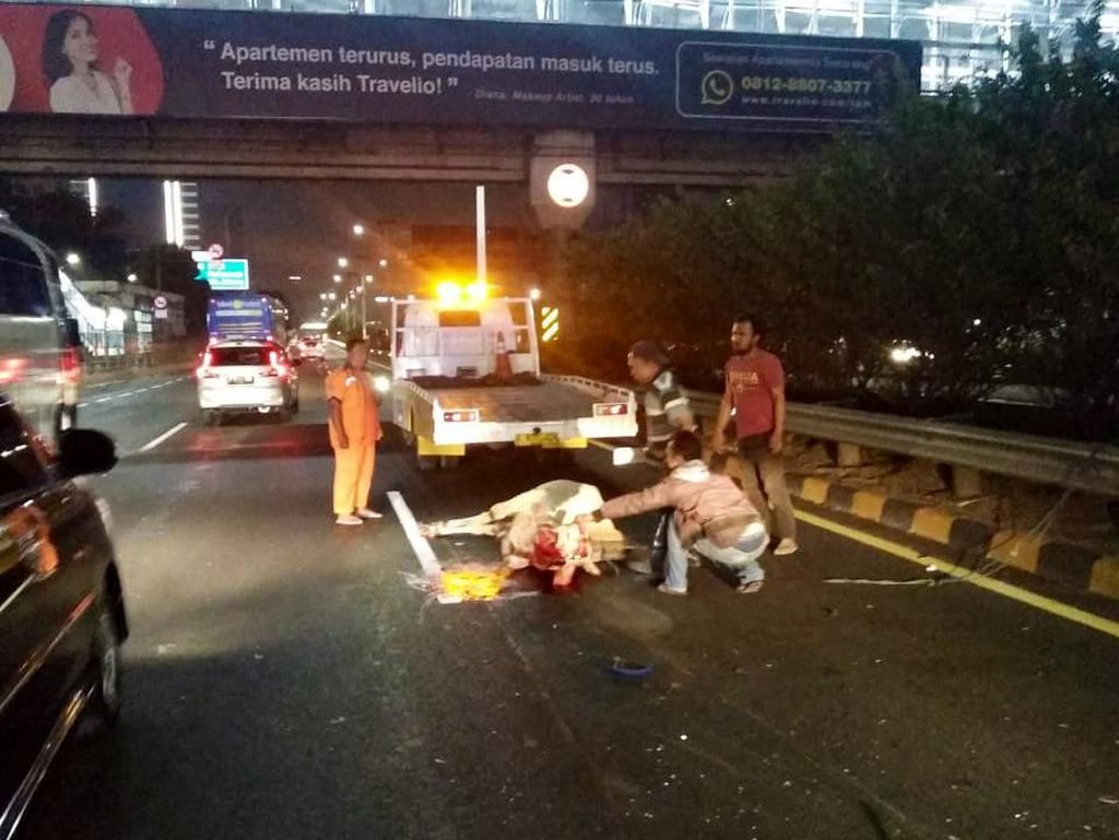 Sapi Kurban Lepas Masuk Tol Tomang, Lalu Tertabrak Taksi