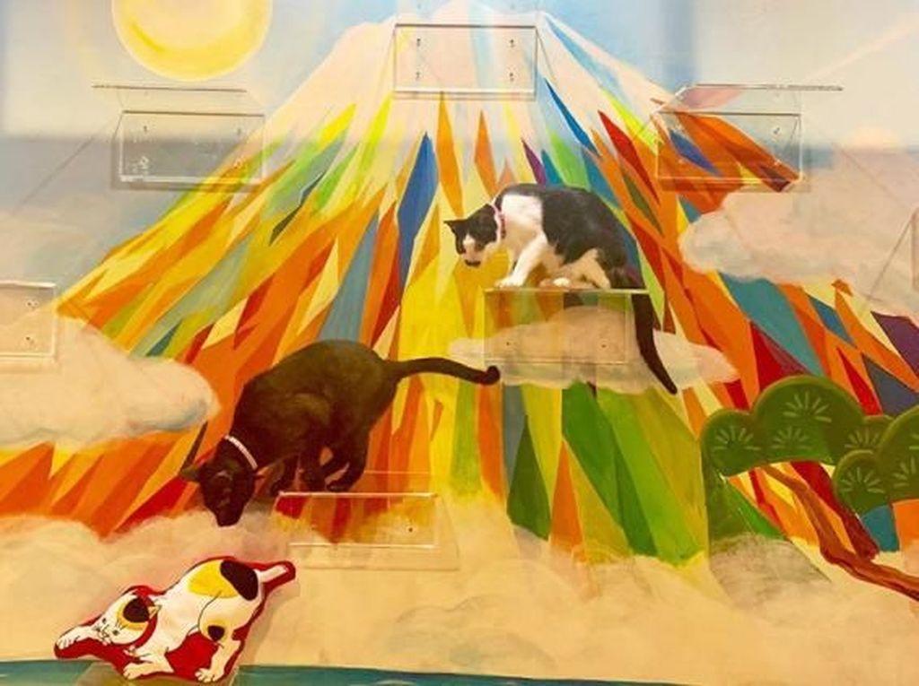 Bertema Pemandian Air Panas, Di Kafe Ini Bisa Makan Bersama Kucing