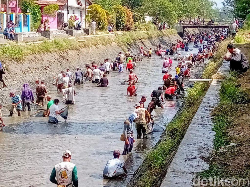 Sambut Kemarau, Ribuan Warga Purworejo Bersihkan Sungai dan Panen Ikan
