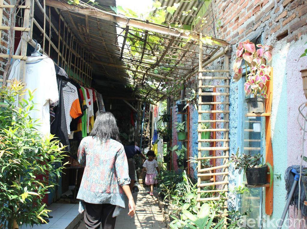 Kampung Hidroponik Cimone, Kesejukan di Tengah Polusi Kota Tangerang