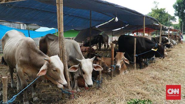 Persiapan penjualan kurban untuk perayaan Idul Adha di Jatinegara, Jakarta Timur, Jumat (2/8)