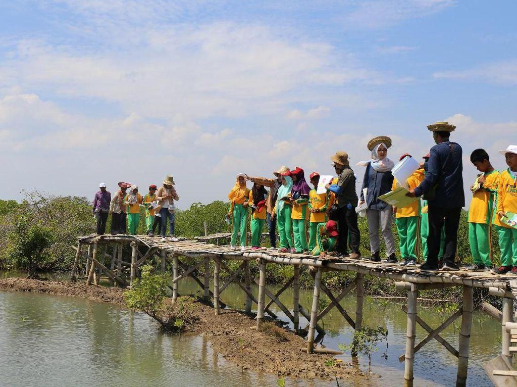 Pertamina Kenalkan Siswa SD Bangkalan Budidaya Mangrove