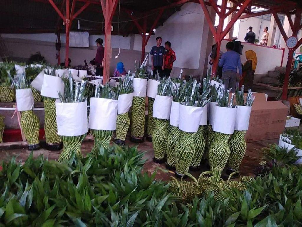Bisnis Bambu Hoki, Kelompok Tani Ini Bisa Ekspor hingga 29 Ton/Bulan