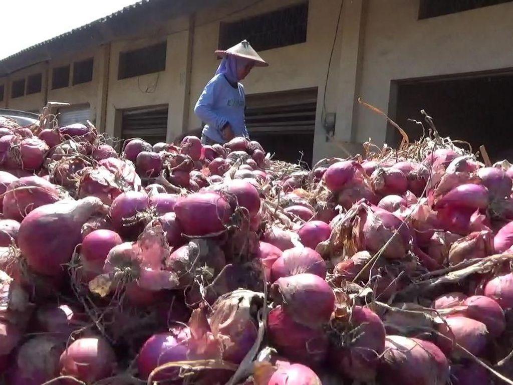 Waduh! Harga Bawang Merah di Probolinggo Cuma Rp 5.000/Kg