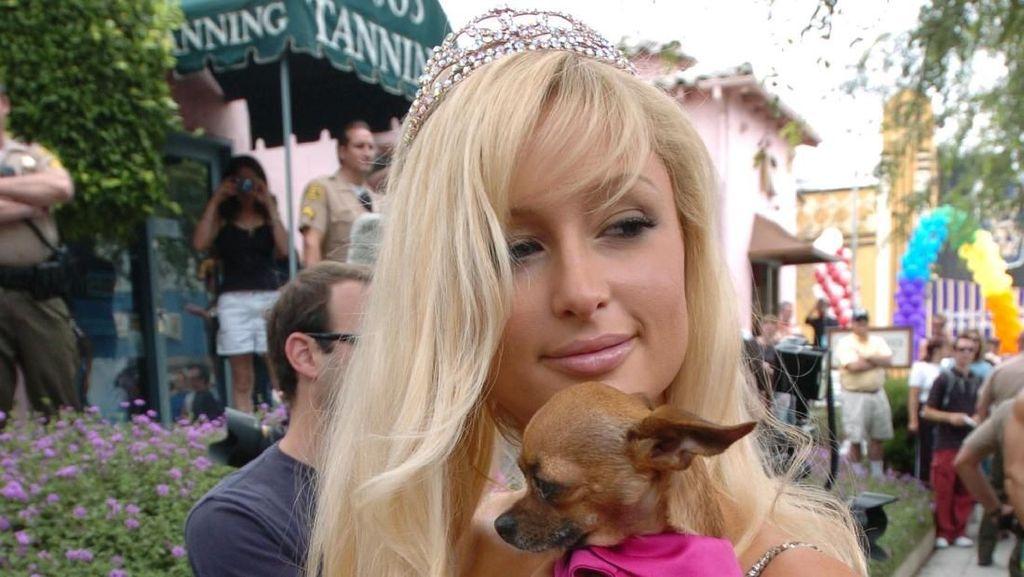 Saat Gaya Anjing Selebriti Dunia Tak Kalah Mewah dari Majikannya