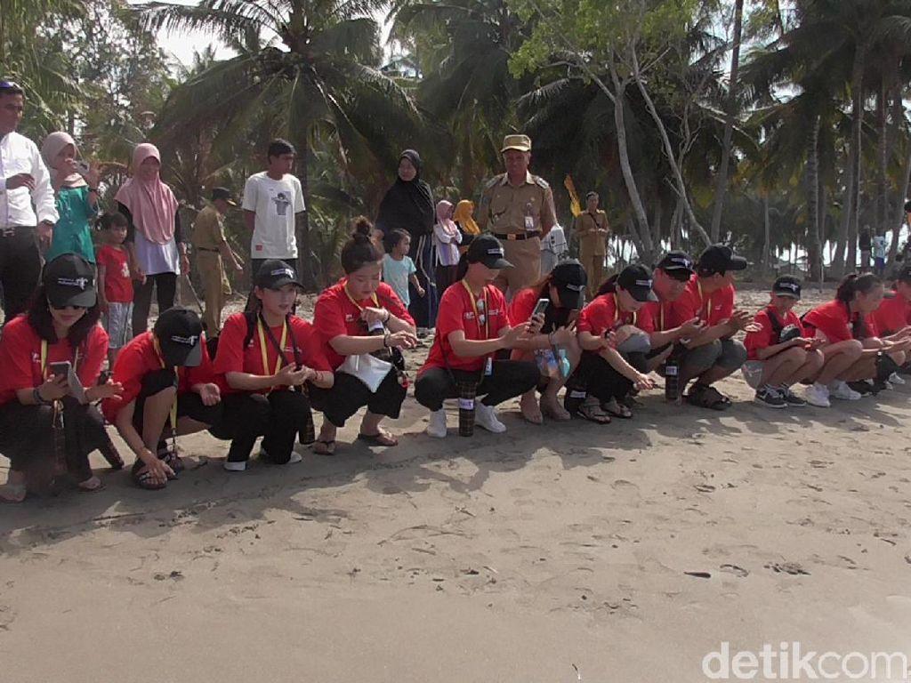 Selamatkan Penyu, Turis Lepas Ratusan Tukik di Polewali Mandar