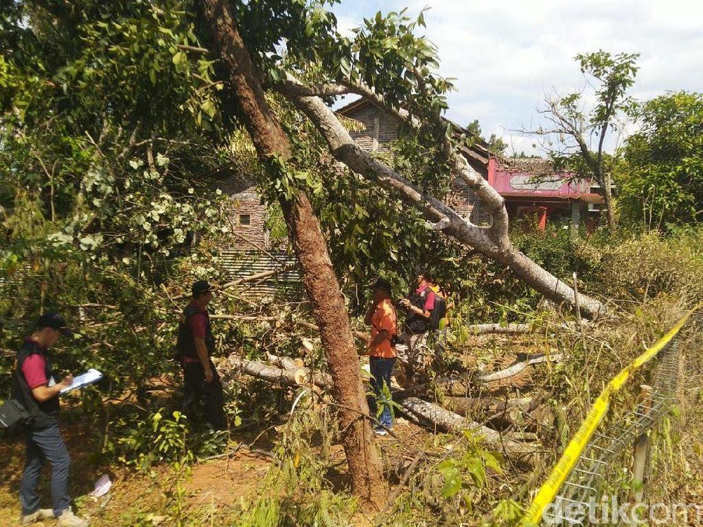 Herannya Ombudsman soal Pohon Picu Pemadaman