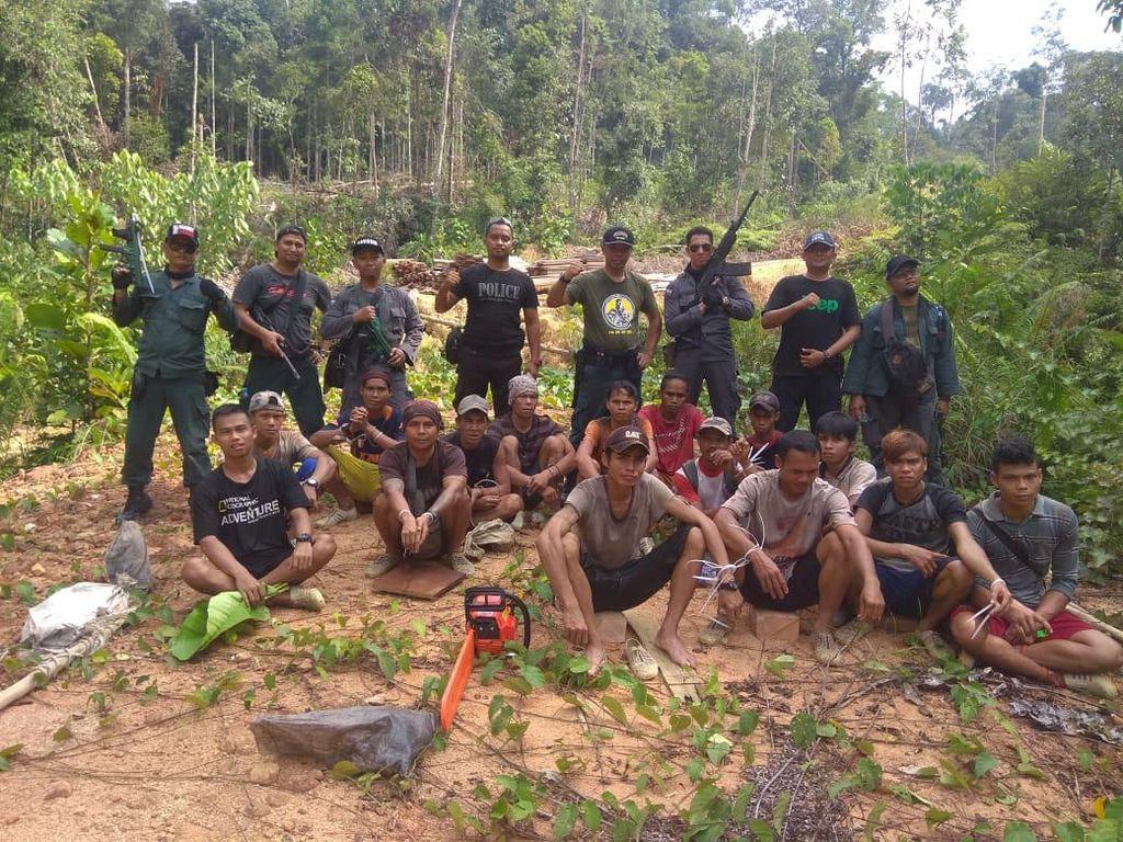 17 Pelaku Pembalakan Liar Ditangkap di Perbatasan RI-Malaysia