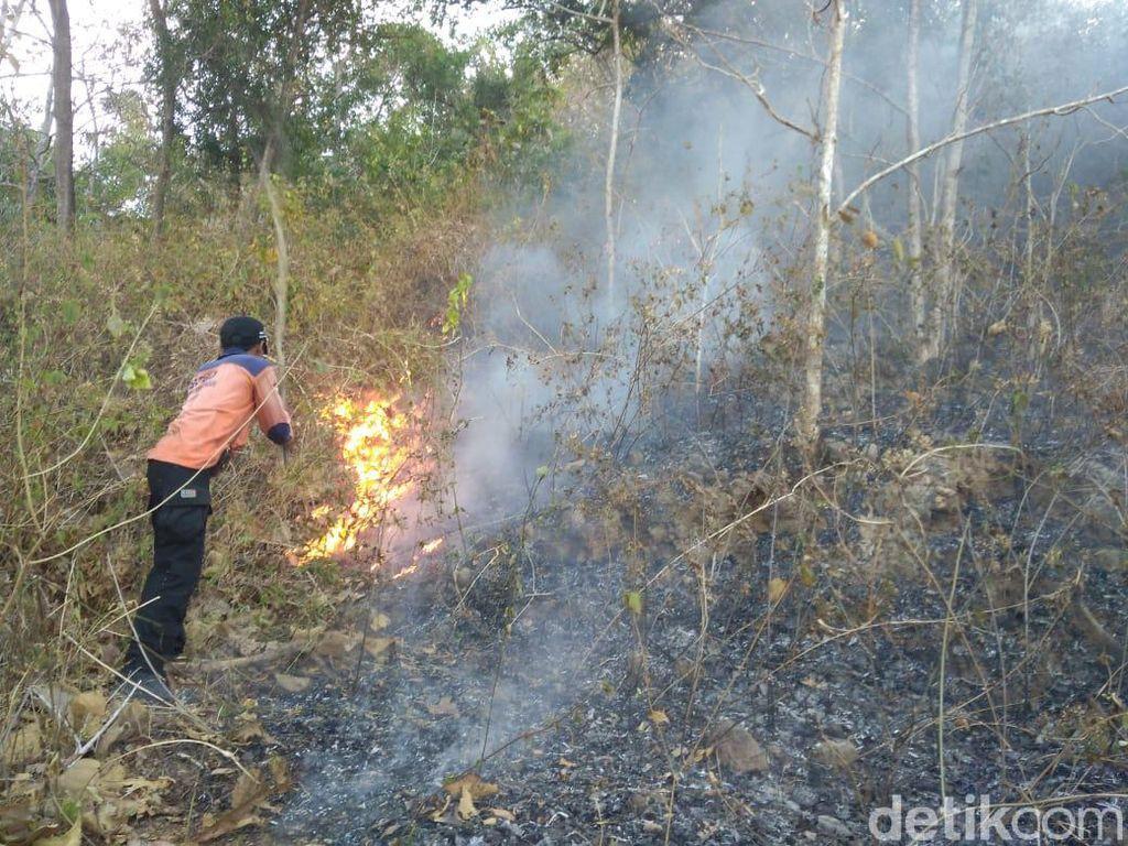 4 Hektare Lahan Jati dan Sono di Wonogiri Terbakar
