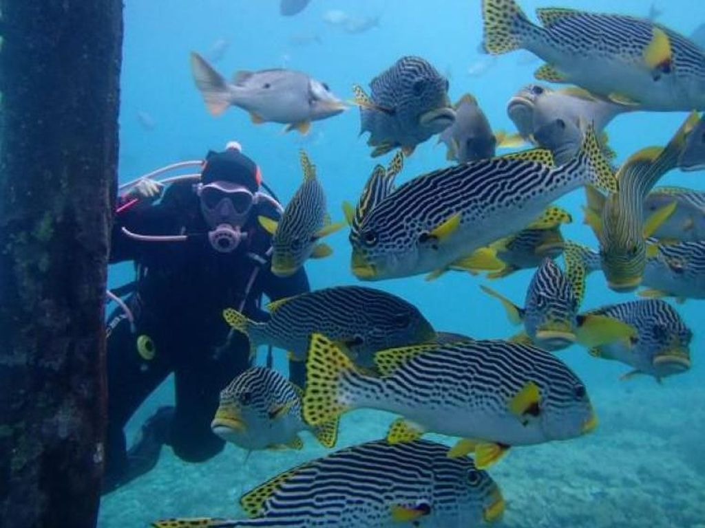 Spot-spot Snorkeling Cakep di Raja Ampat