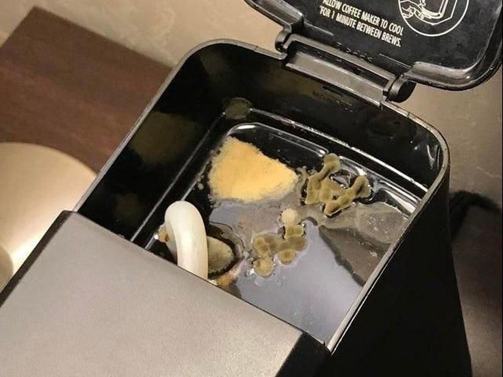 Astaga! Tamu Hotel Ini Temukan Jamur di Mesin Pembuat Kopi