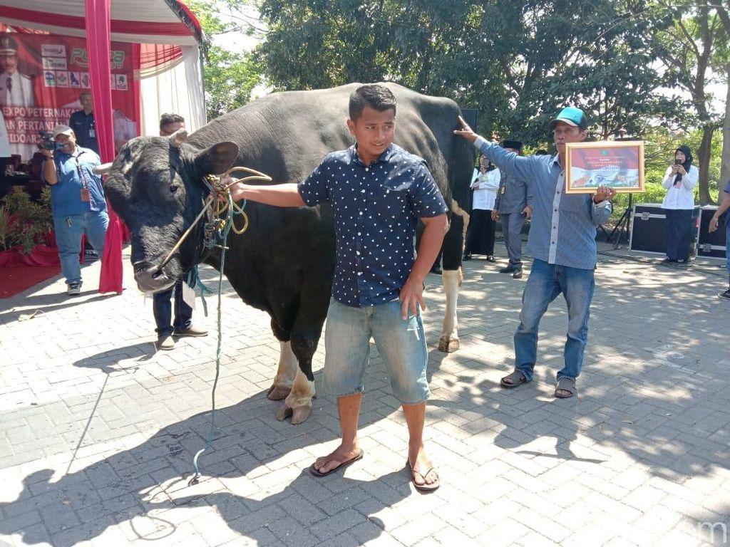Sapi Seberat 1.132 Kg Menang Kontes Hewan Kurban di Sidoarjo