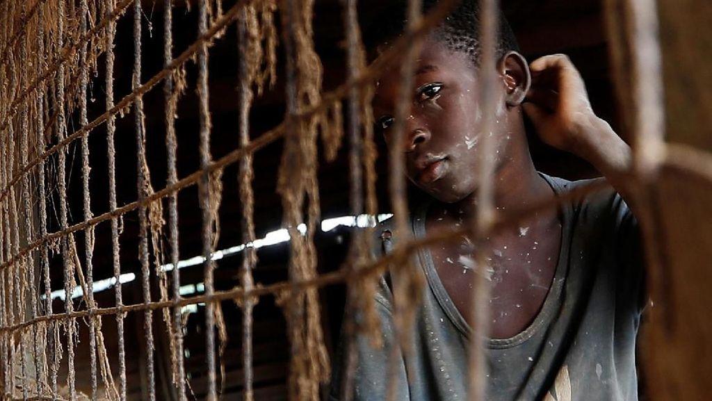 1.800 Orang Tewas Akibat Wabah Malaria di Afrika
