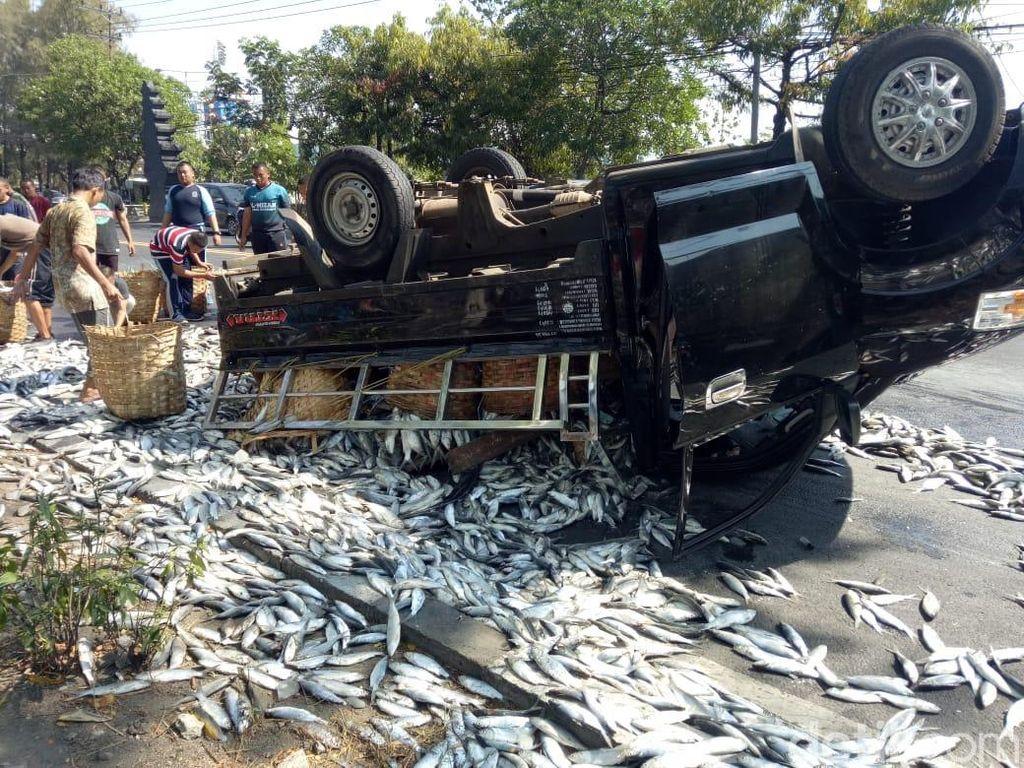 Pecah Ban Bikin Pikap Muat Bandeng Terbalik di Lamongan