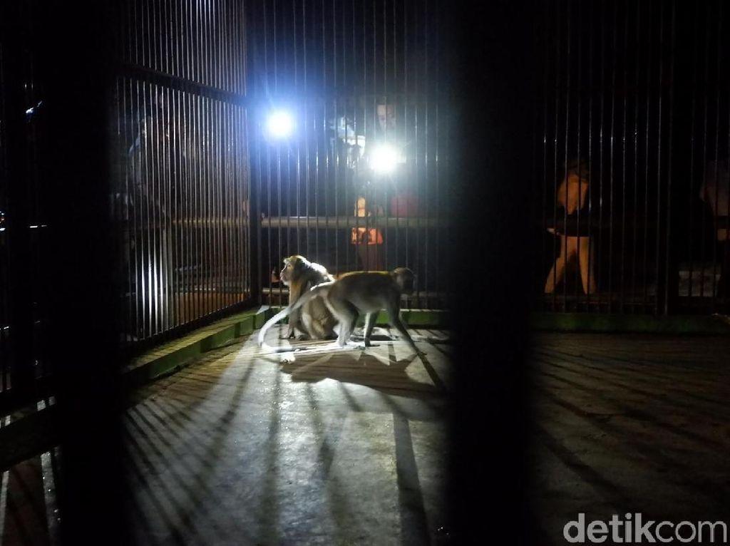 Foto: Gelap-gelapan di Kebun Binatang Serulingmas Banjarnegara