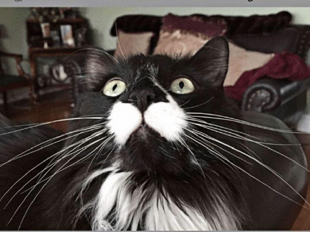 Miaw! Meme Kocak Rayakan Hari Kucing Sedunia