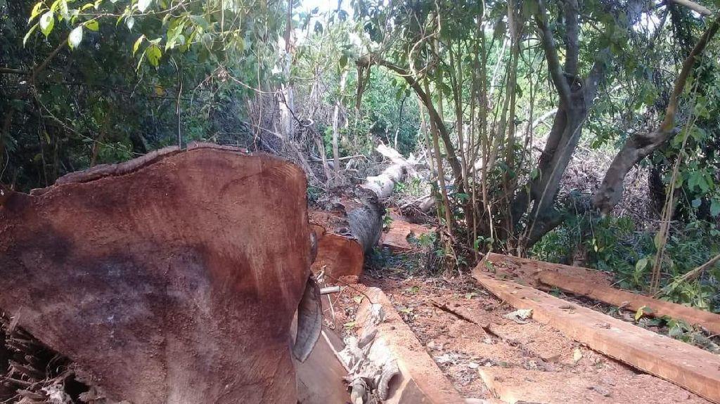 Foto: Ekspedisi Air Terjun Berakhir Temukan 100 Kubik Kayu Ilegal