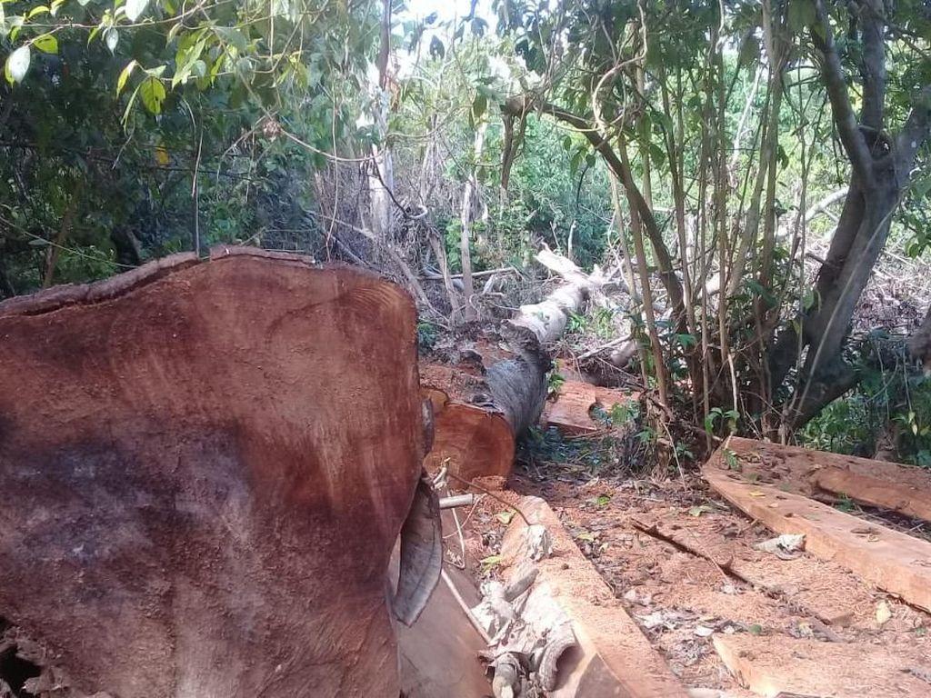 Ekspedisi Air Terjun di Balik Temuan 100 Kubik Kayu Ilegal di Tambora