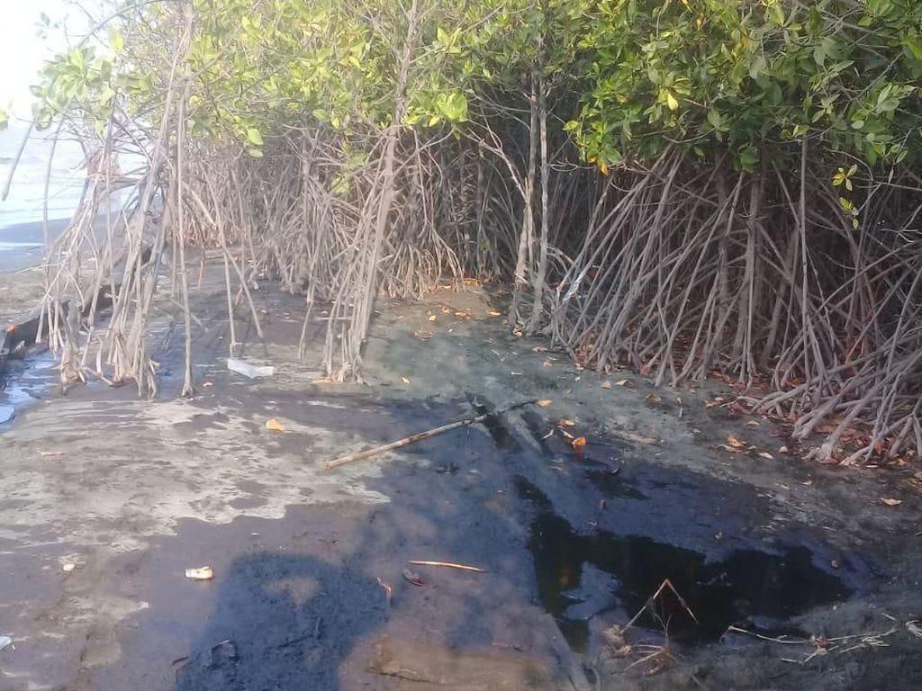 Ratusan Hektare Terumbu Karang Rusak Tercemar Tumpahan Minyak Pertamina