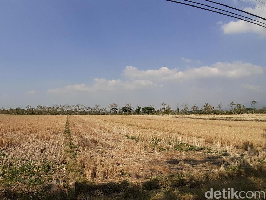 Siapkan Rp 7 Triliun, UEA Mau Garap Lahan Pertanian di Kalteng