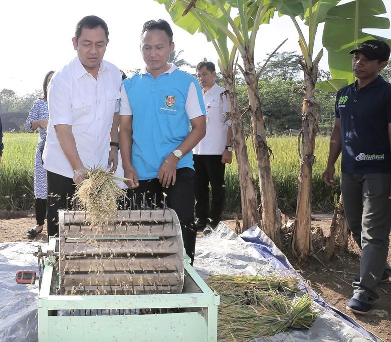 Dapat Benih dari Badan Tenaga Nuklir, Petani di Semarang Panen Besar
