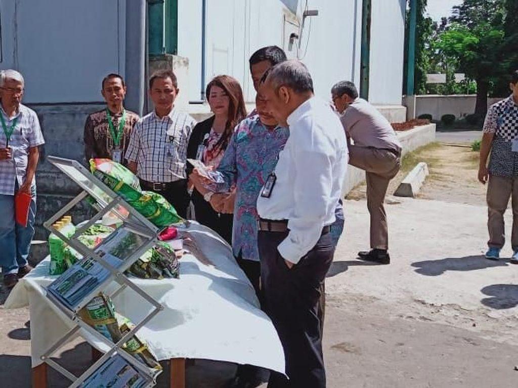 Indonesia Ekspor 115 Ton Edamame ke Jepang
