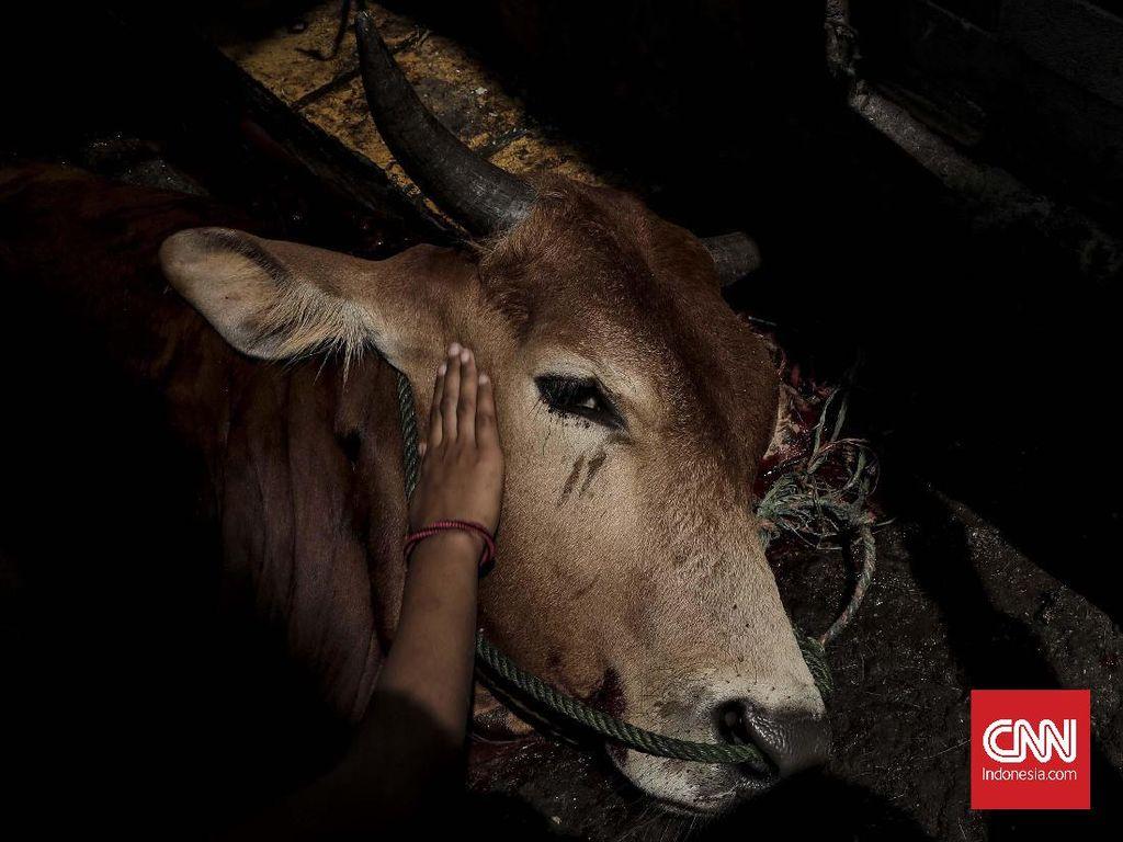 Idul Adha, ACT Sebar Hewan Kurban ke Penjuru RI dan Dunia