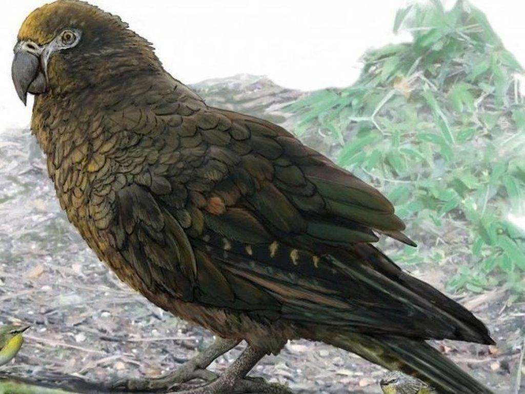 Fosil Burung Nuri Setinggi Satu Meter Ditemukan di Selandia Baru