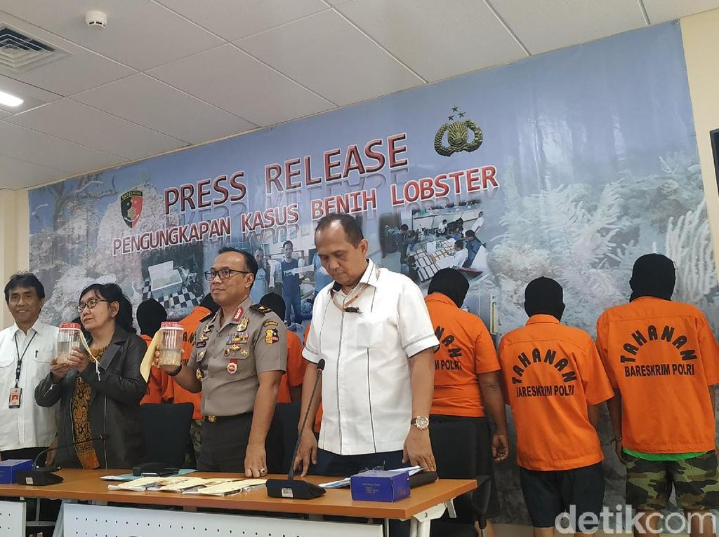 Polri Gagalkan Penyelundupan Benih Lobster Senilai Rp 8,5 M di Lampung