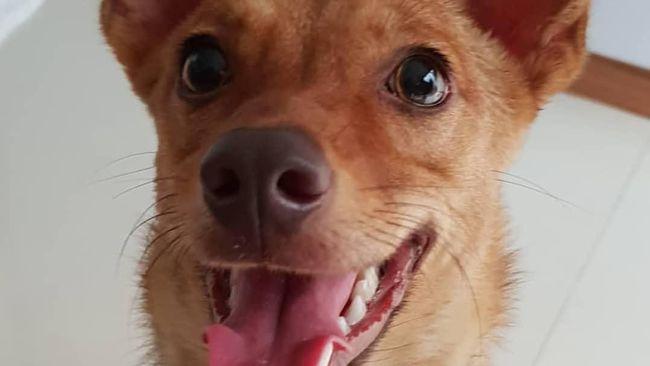 Berita Polisi Memburu Penembak Brutal Anjing Beedo Kamis 22 Agustus 2019