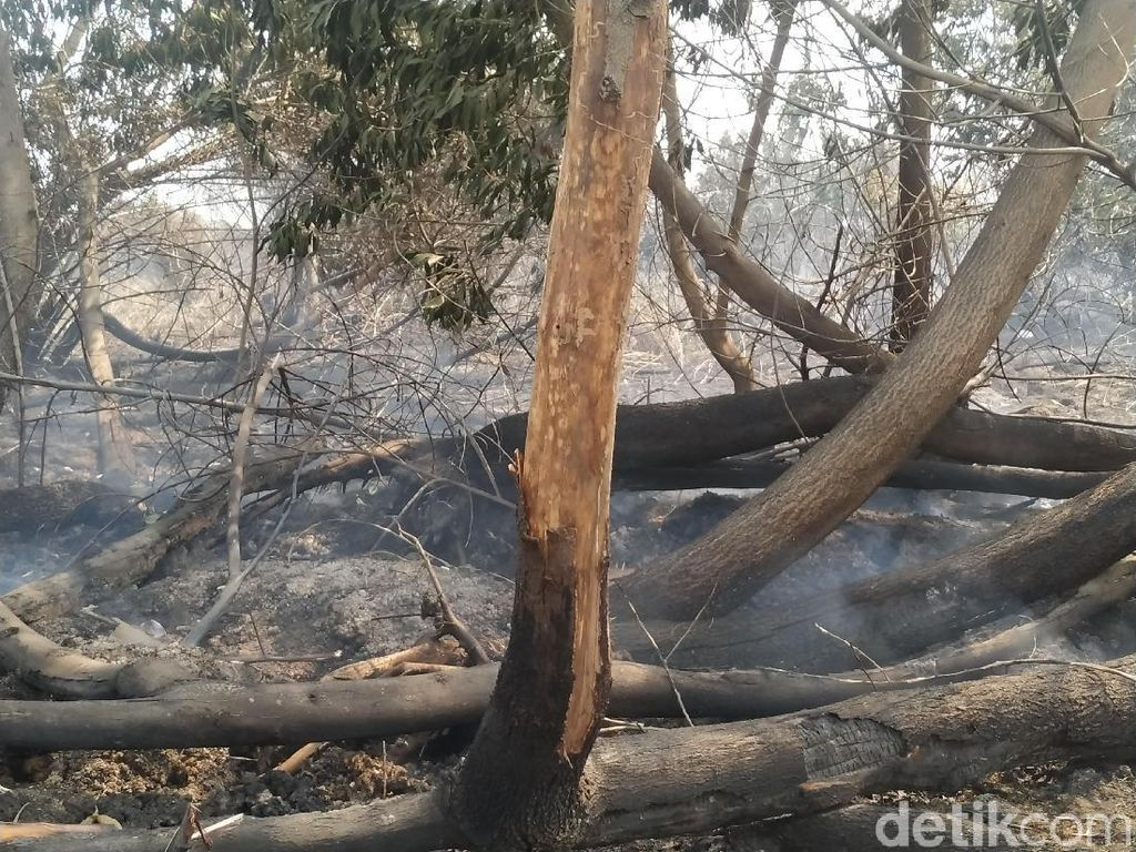 Bakar Lahan 1,5 Hektare di Riau, Pelaku Mengaku Ingin Usir Monyet