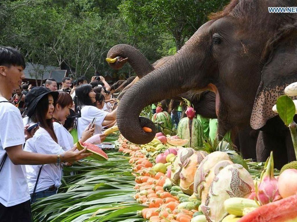 Hari Gajah Sedunia, Gajah di China Pesta 3 Ton Buah