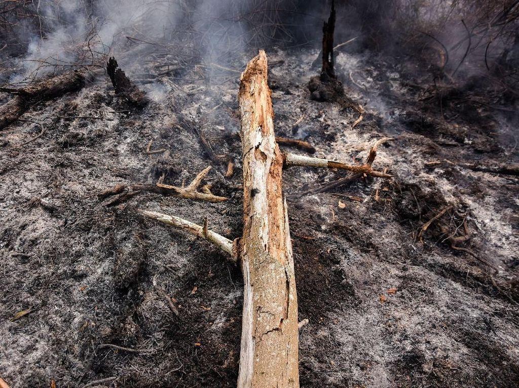 Polisi Tangkap 5 Orang Terkait Kebakaran Hutan dan Lahan di Riau