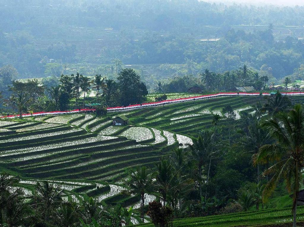 Bendera Merah Putih Sepanjang 1.945 Meter Berkibar di Bali
