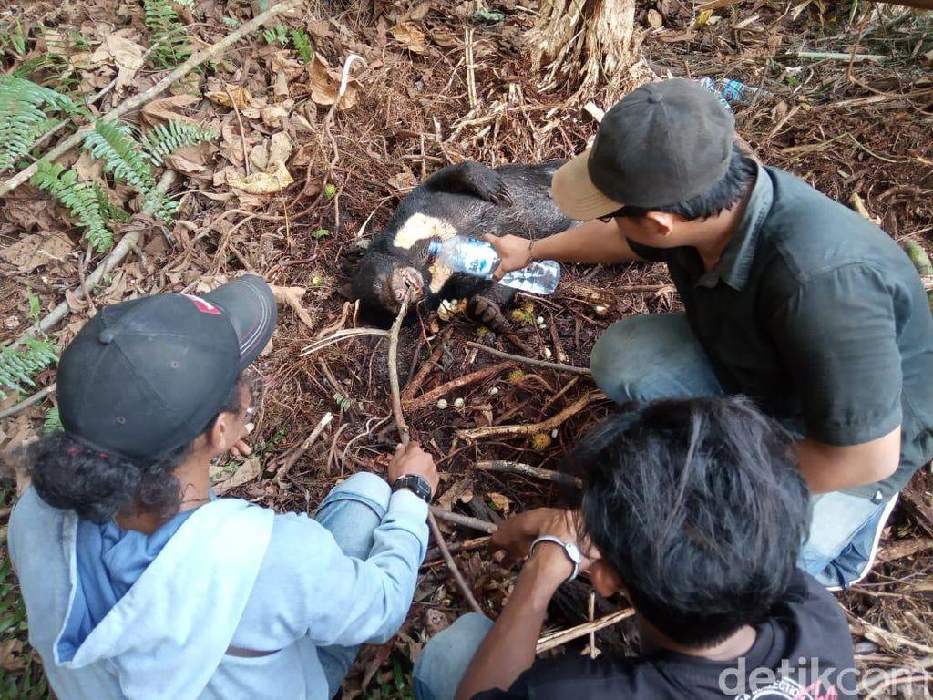 Beruang Madu Mati Kena Jerat di Hutan Senepis Riau