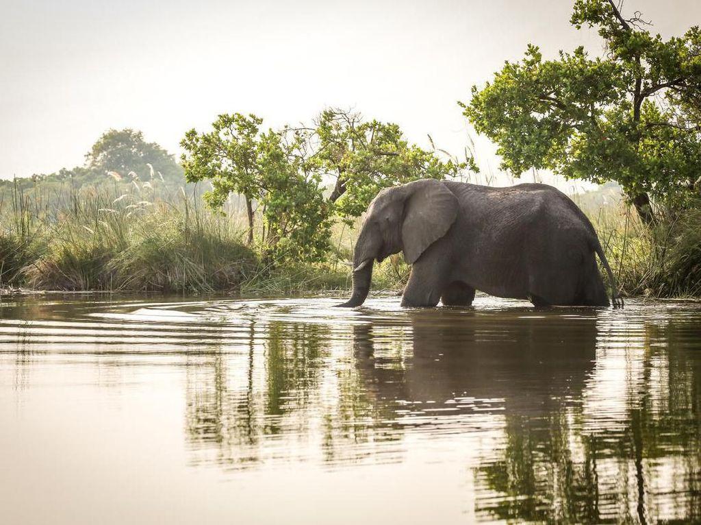 Petugas Kebun Binatang Tewas Kena Hantam Belalai Gajah