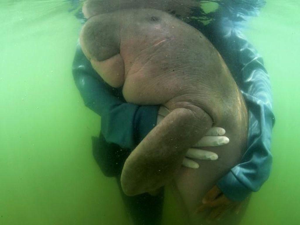Cerita Tim Dokter soal Dugong yang Mati Gara-gara Makan Plastik